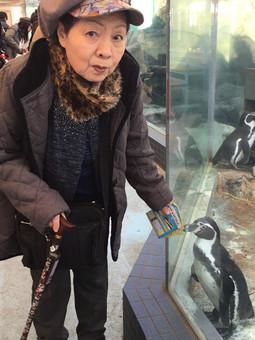 人懐こいフンボルトペンギンと母